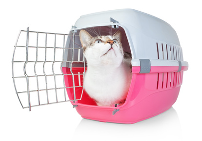 Pet cat in a cage for transport with door open. He looks up.
