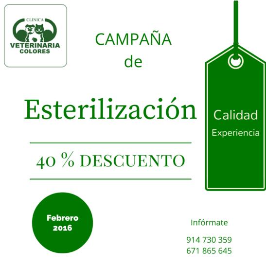 campaña esterilización 2-3