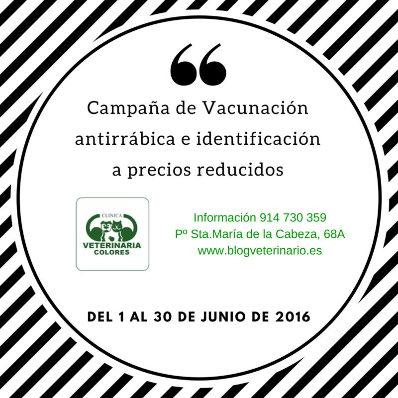Campaña de vacunación antirrábica e identificación-2
