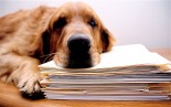 B0R1DY depressed dog rests on files model released. Image shot 2006. Exact date unknown.