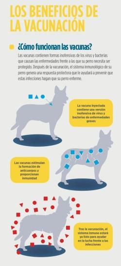 tos-de-las-perreras-vacunacion