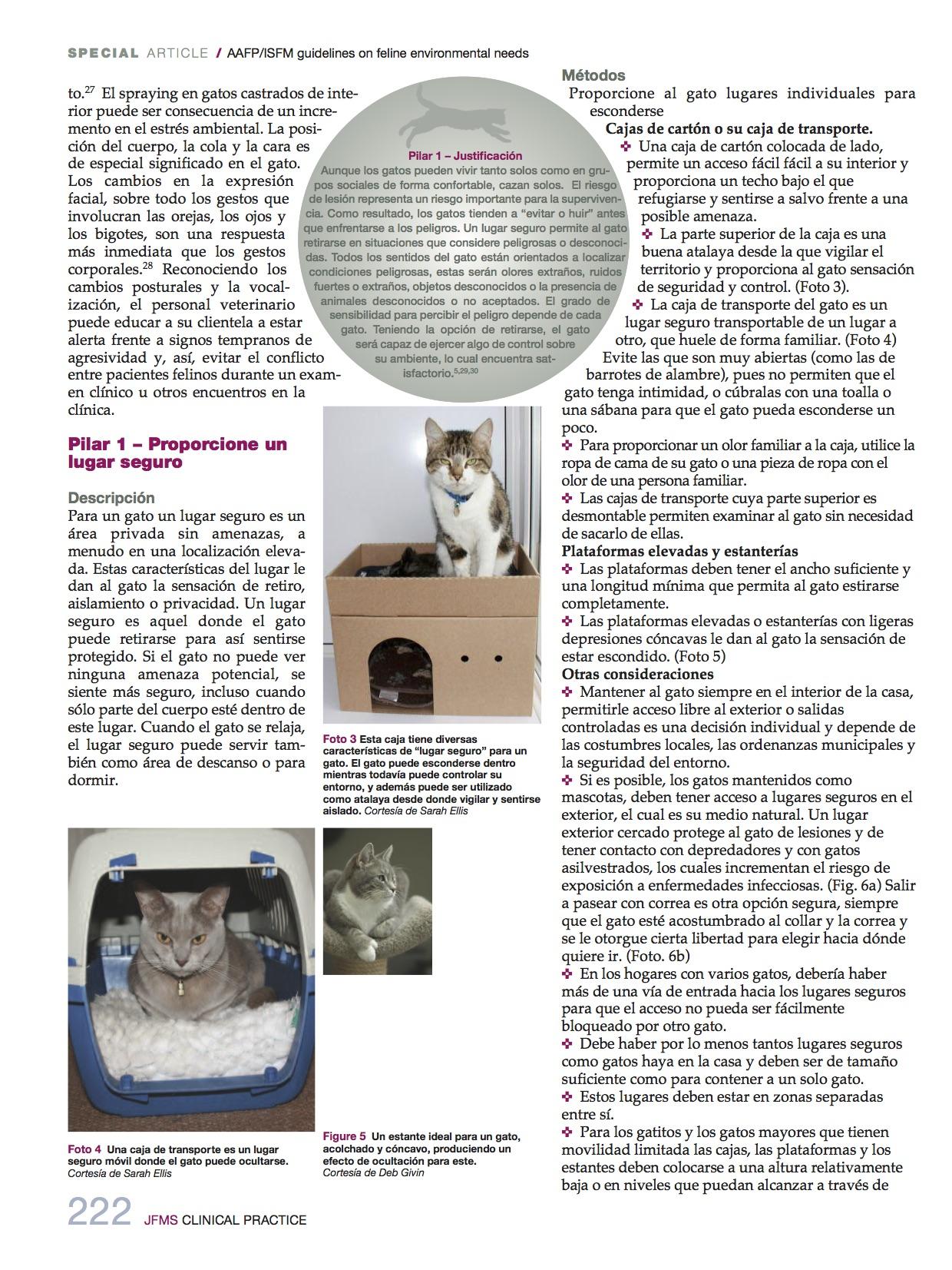 necesidades_medioambientales4_felinas