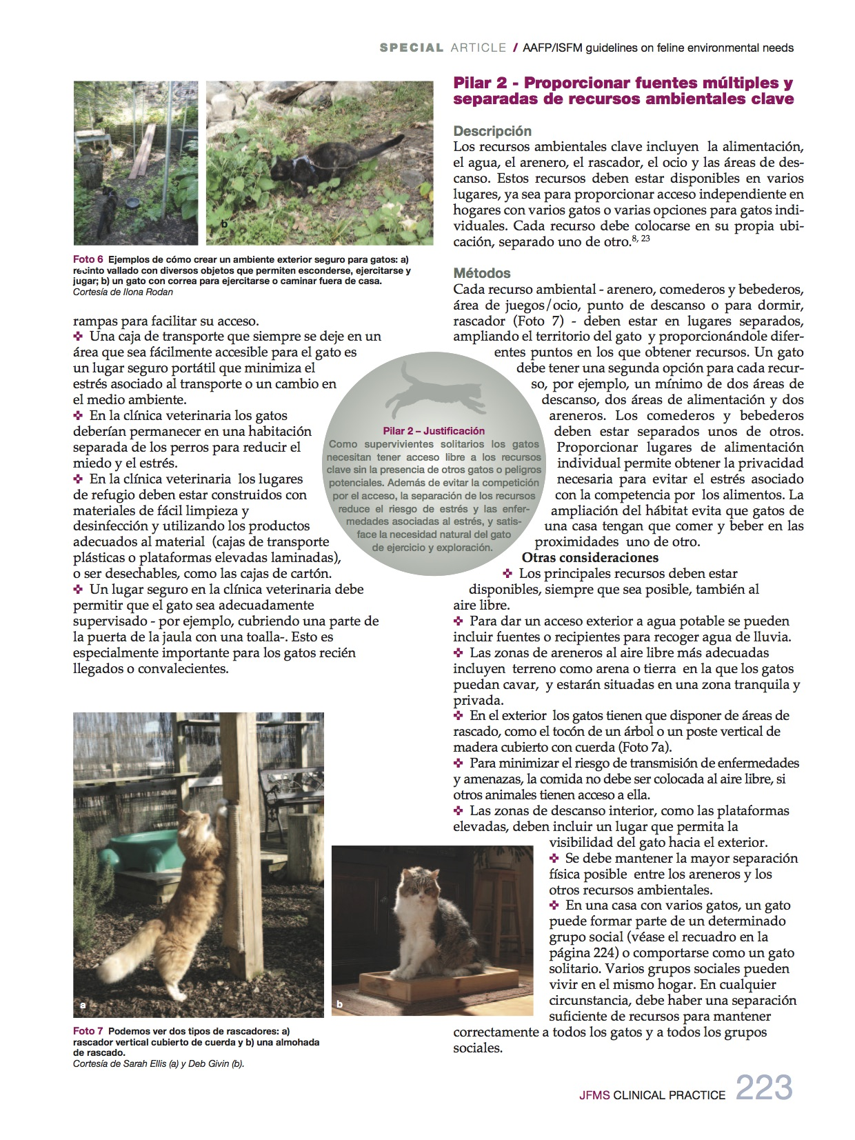 necesidades_medioambientales5_felinas