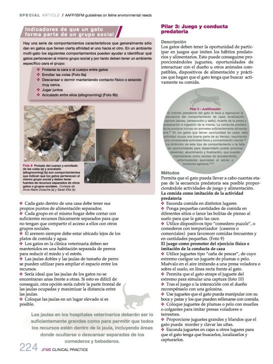 necesidades_medioambientales6_felinas