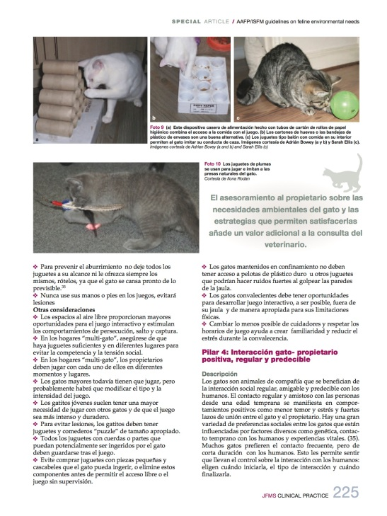 necesidades_medioambientales7_felinas