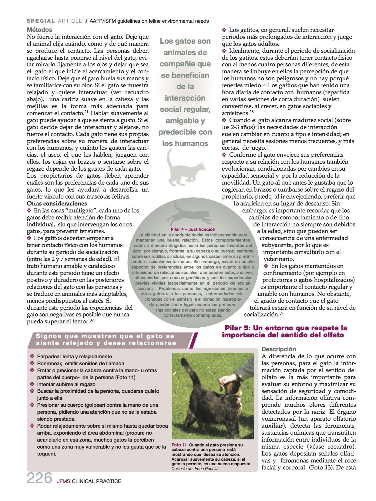 necesidades_medioambientales8_felinas