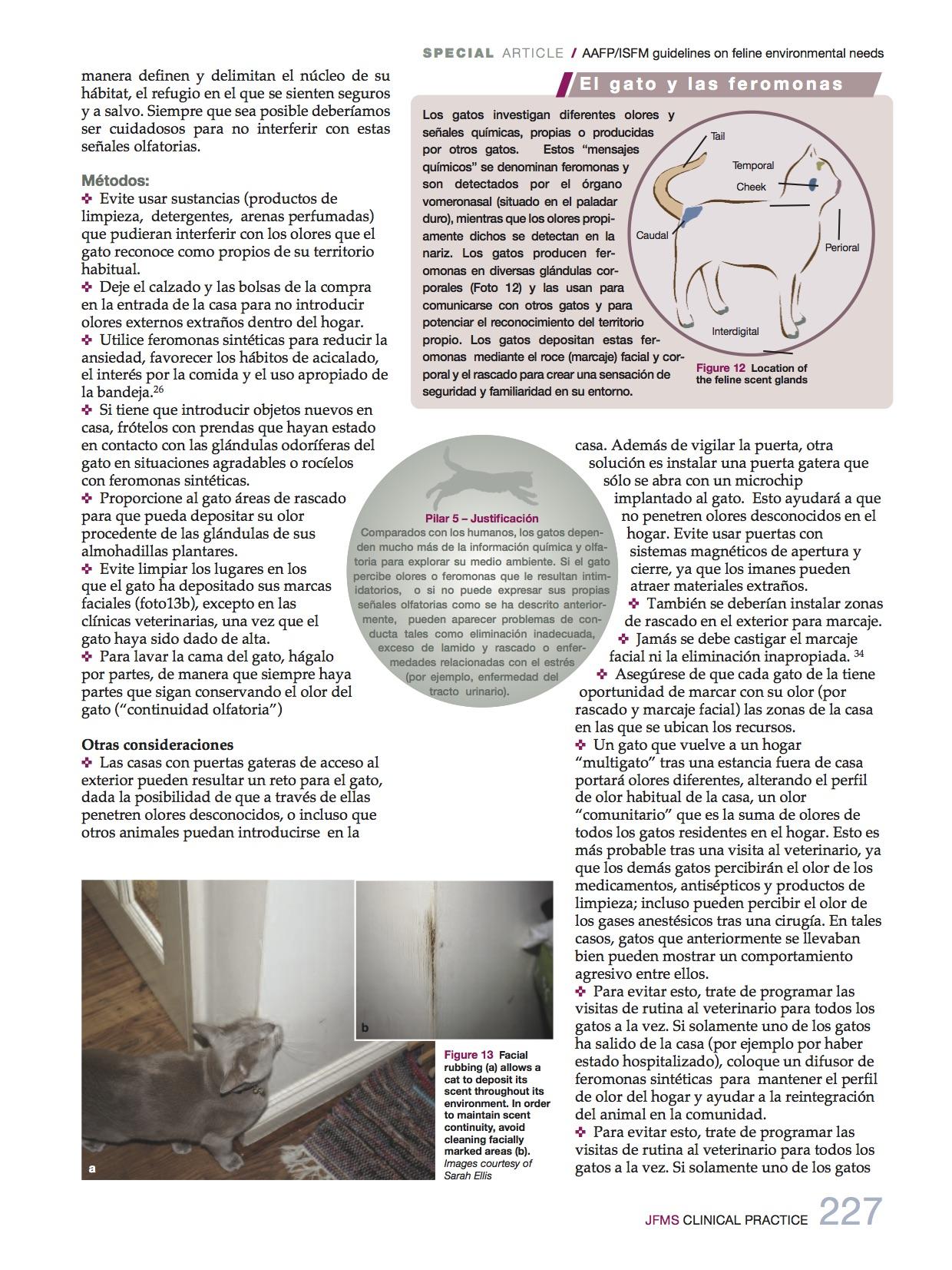 necesidades_medioambientales9_felinas