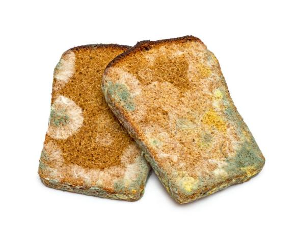 mouldy-rye-bread-two-slices-isolated-white-background-36227102