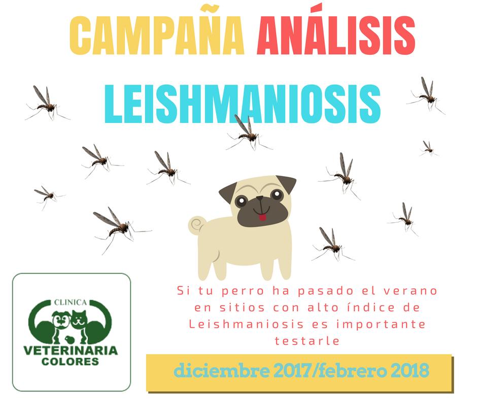 campaña leishmaniosis 2018