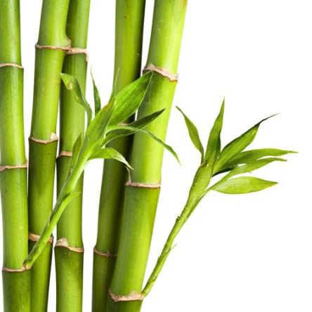 Benefícios-do-Bambu-3-500x500