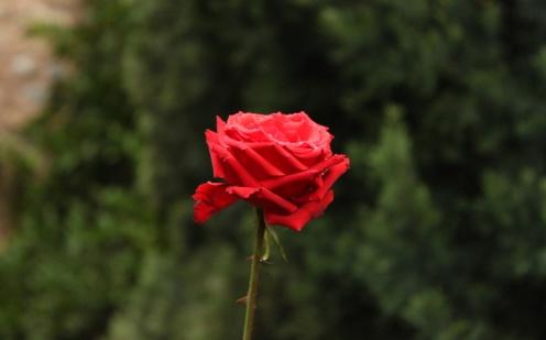 RosasTienenEspinas